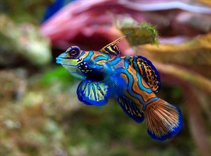 BlueFish-1.jpg