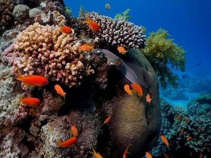 Coral-Reef-1.jpg